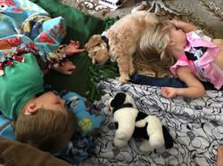 Labradoodle Puppies Kent
