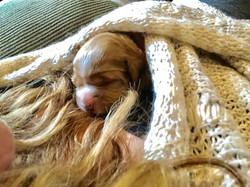 Sunday snuggles