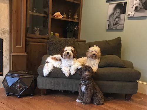 Truffles, Ruby & Gracie