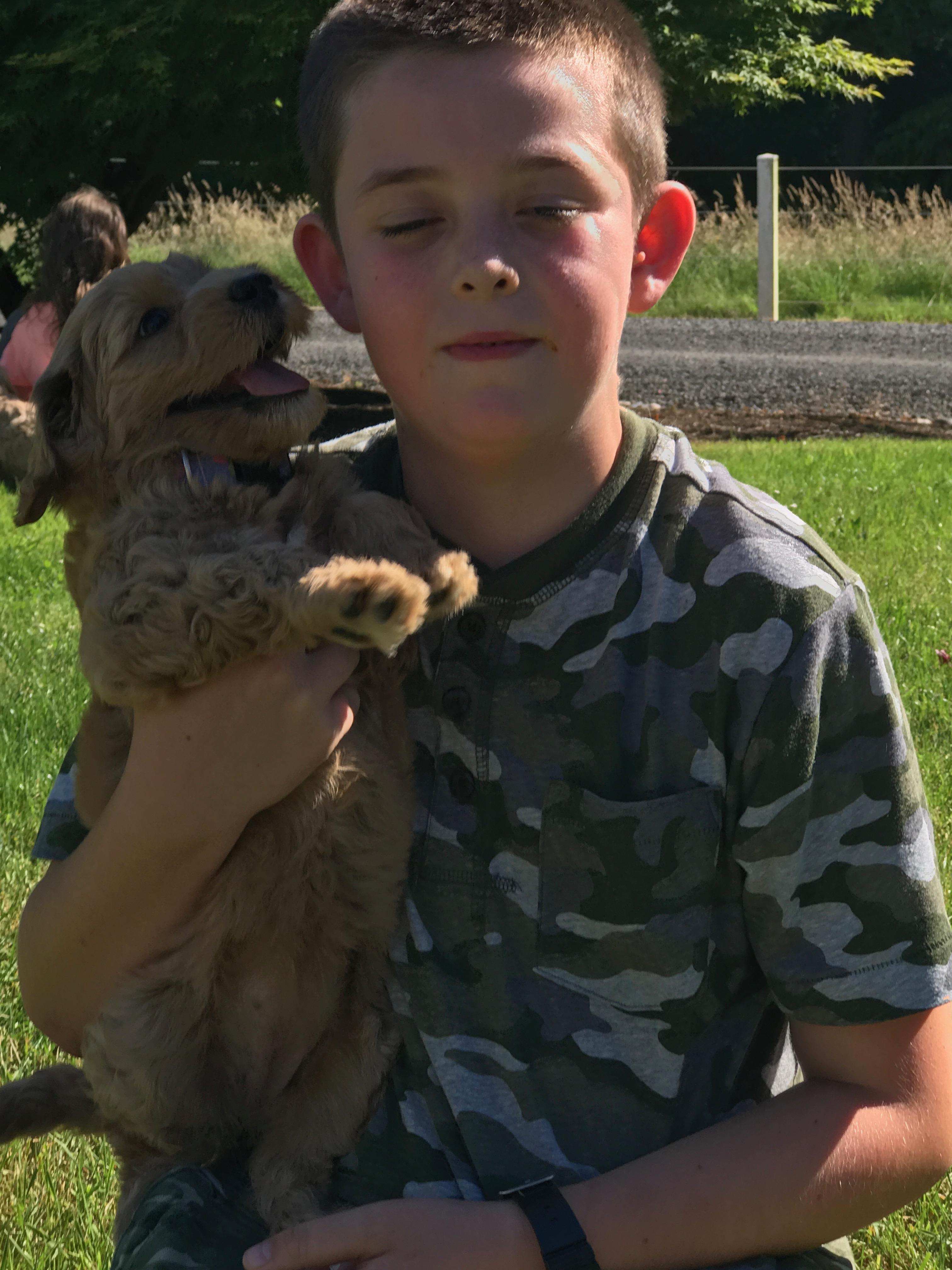 Australian Labradoodle Puppies Orego