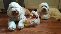 Mom, Dad & Tilly