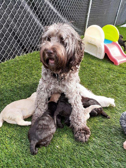 Mama and babies in the puppy yard
