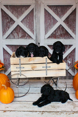 Gracie's past puppies
