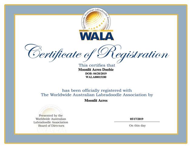Doobie Certificate.jpg