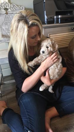 Labradoodle Puppies Bellingham