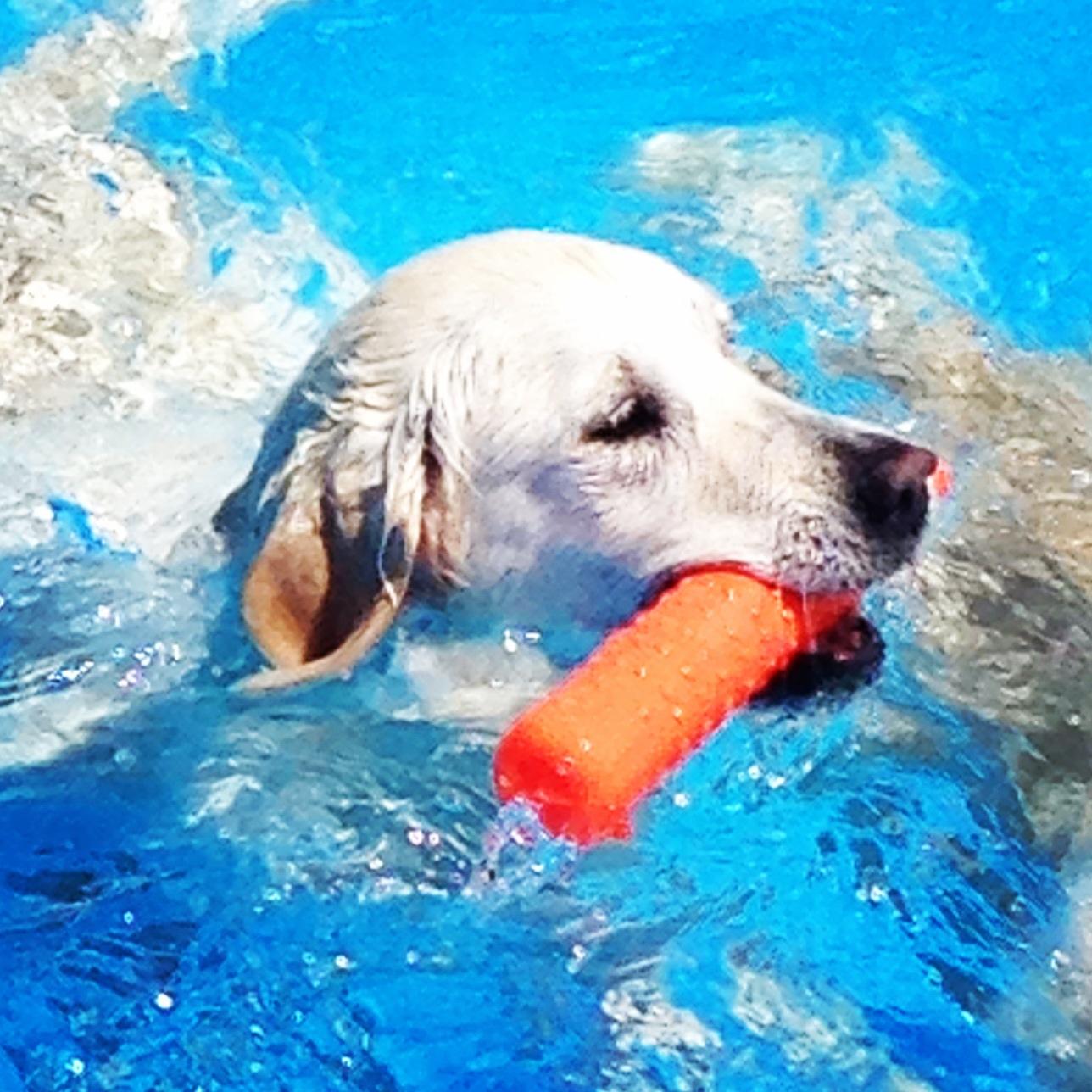 Bubbles Swim 2014