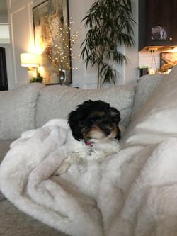 Weekend snuggles