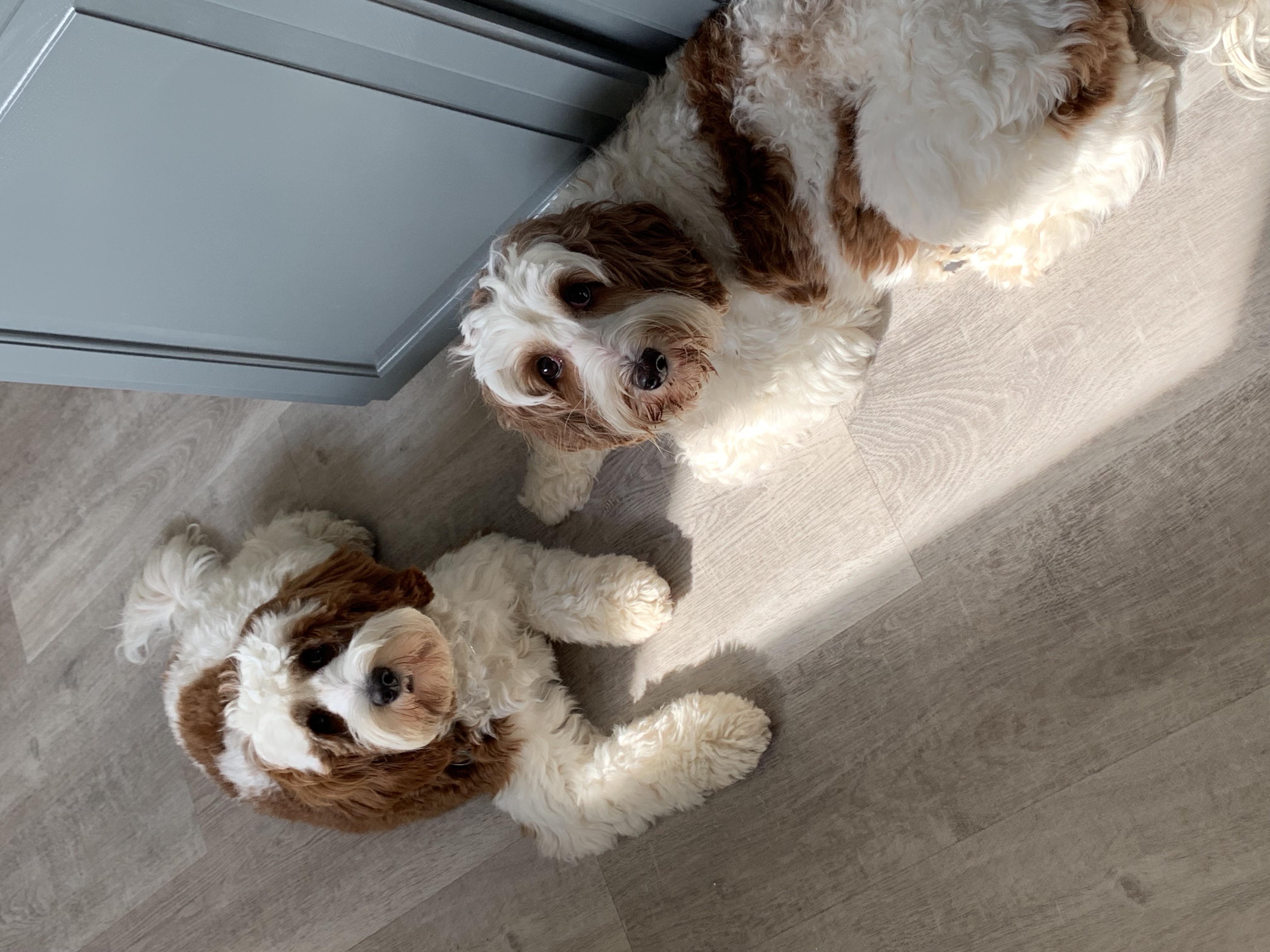 Gabby & Ruby
