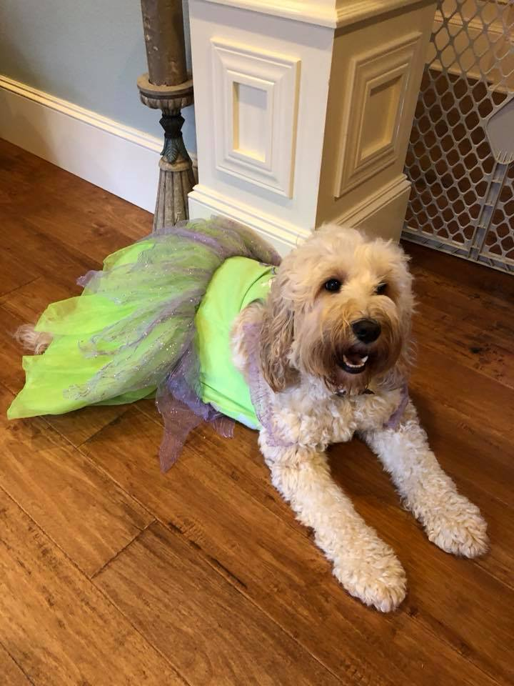 What?  I can be Tinkerbell!