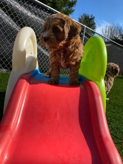 Queen of the slide!
