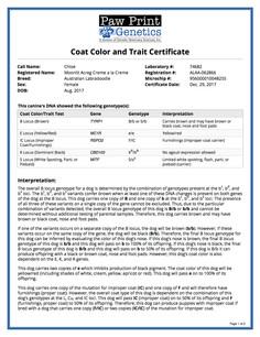 Chloe color traits.jpg