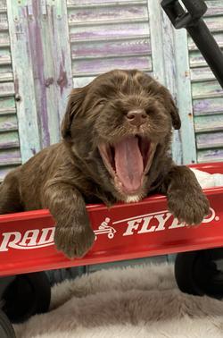 Big yawns!