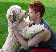 Australian Labradoodle Puppies For Sale Washington Oregon Seattle Portland Bend