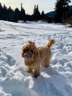 Snow Day Vinnie x Gracie Pup