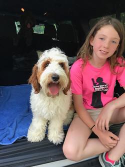 Australian Labradoodle Puppies NJ