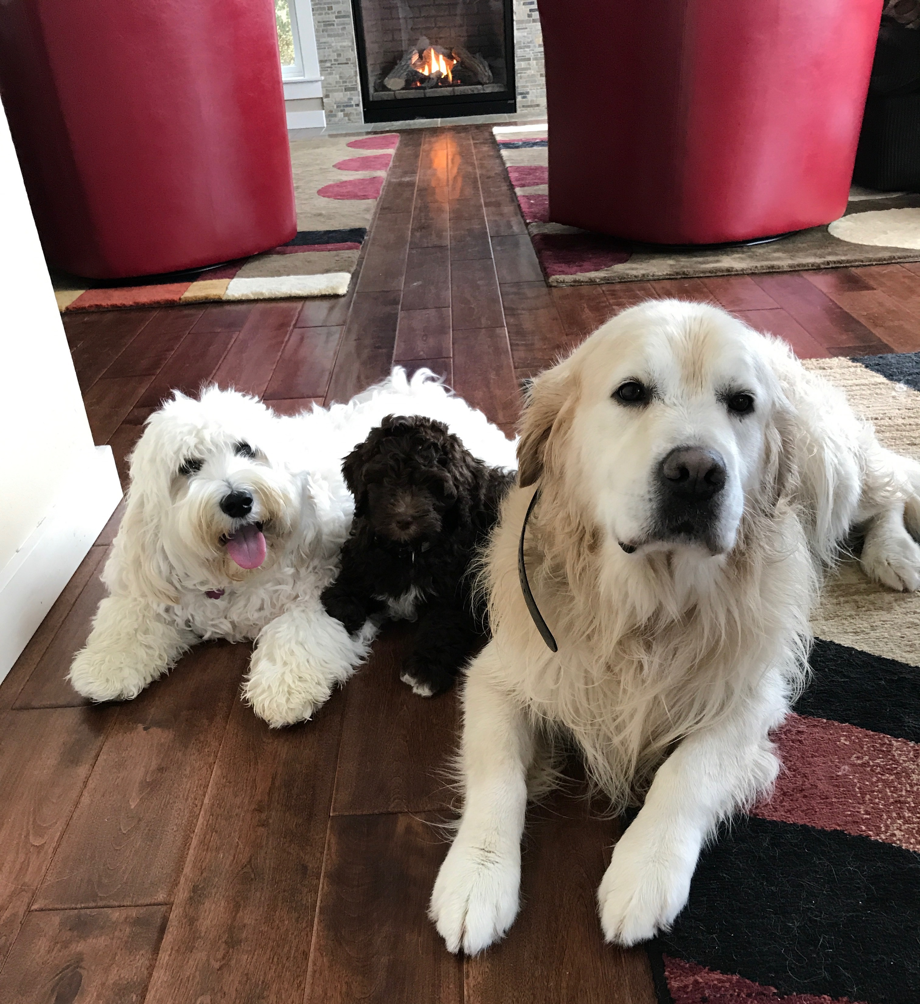 Luke, Truffles & Sampson