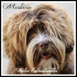 Hale's Giorgio Armani - Mustacio