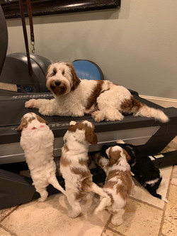 Best use of the treadmill ever!