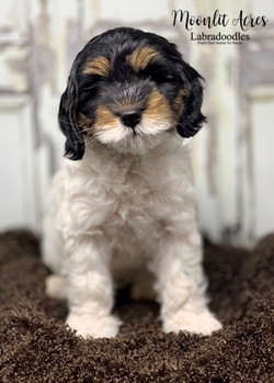 Sophia as a puppy
