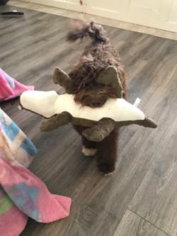 Toy hound!