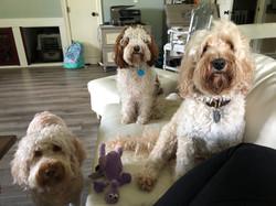 Daisy, Ruby & Gracie 2018