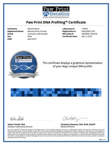 DNA Marshmellow.jpg