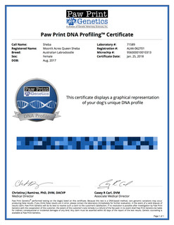 Sheba DNA.jpg