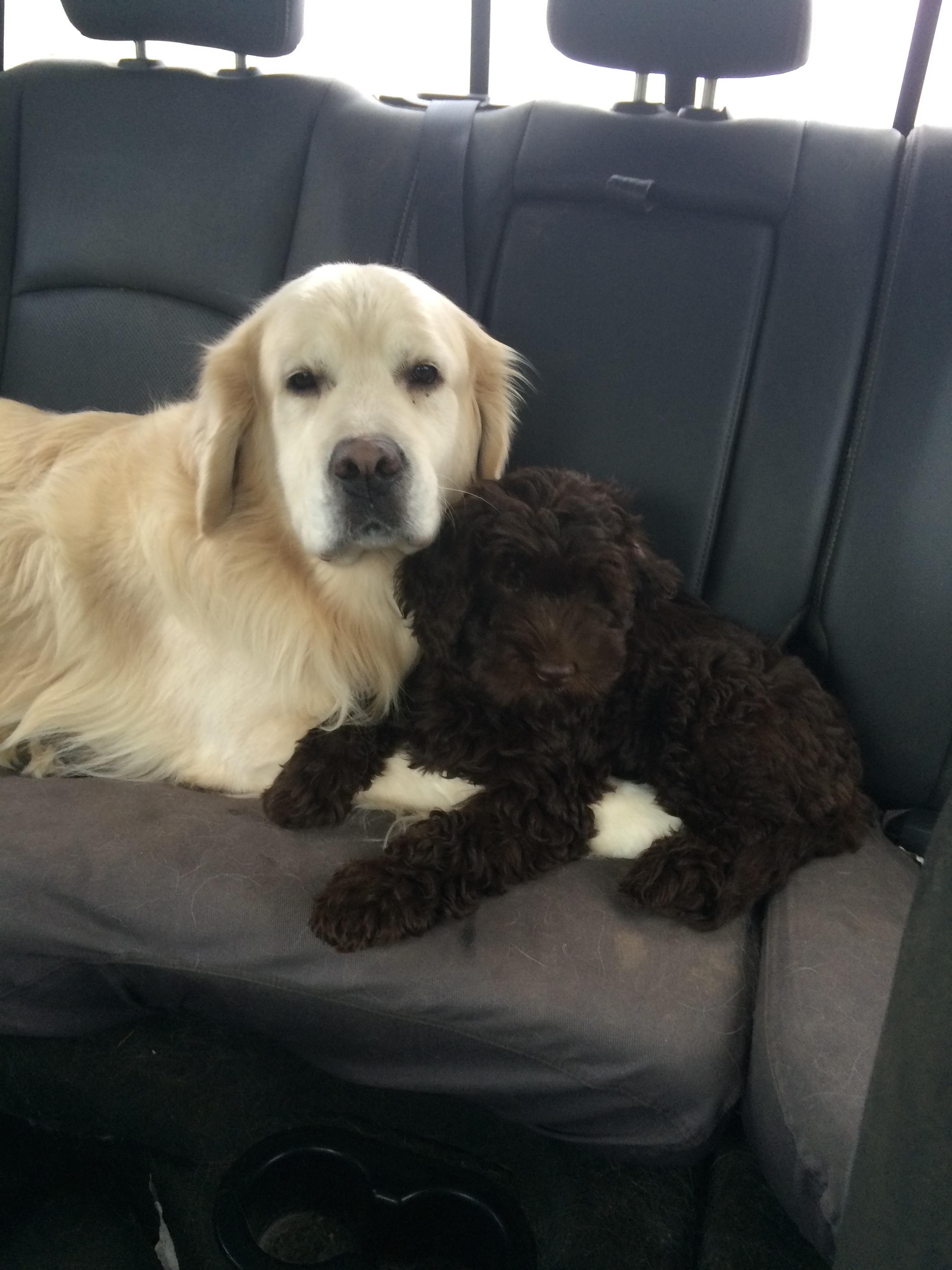 River & Sampson Best Friends!