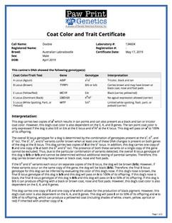 Doobie Color & Coat.jpg