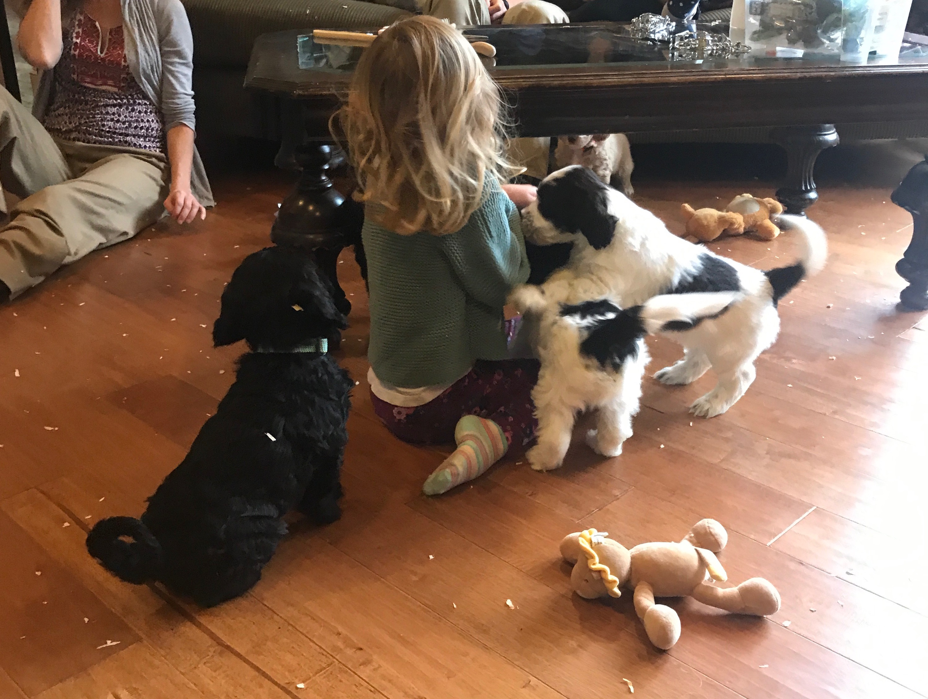 Puppies loving on little ones