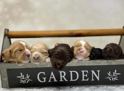 Full Of Puppies