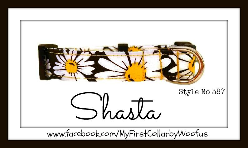 Shasta 387