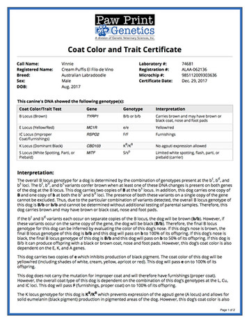 Color Trait - Cream Puff's El Filo de Vi