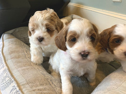 Puppy on the left is Gracie's
