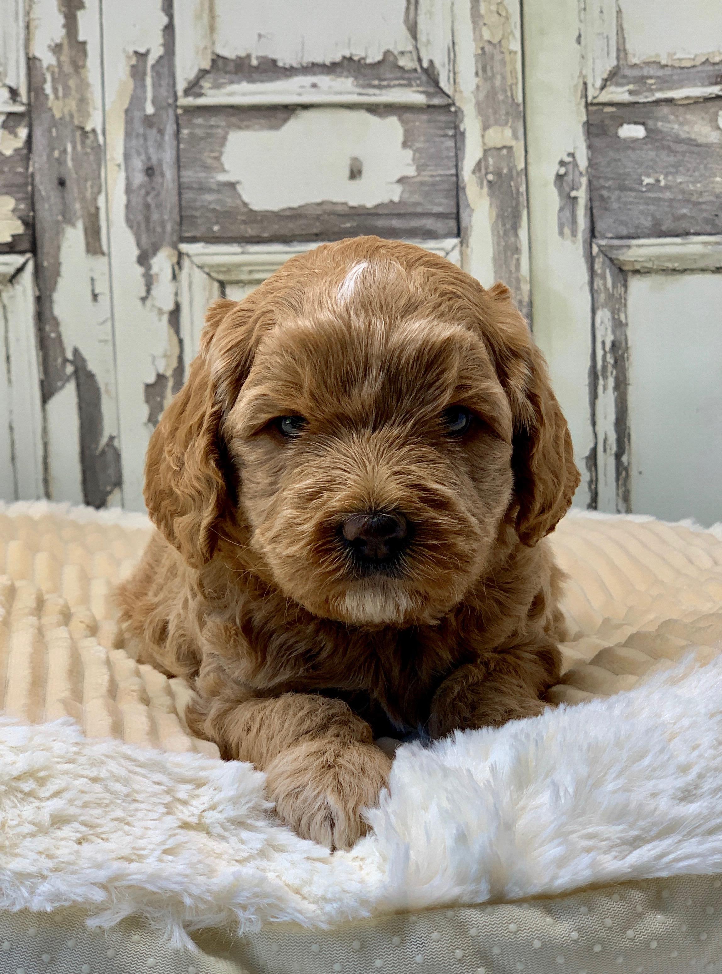 Look at this grumpy face!