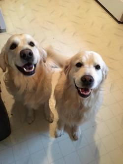 Jax & Sampson 2