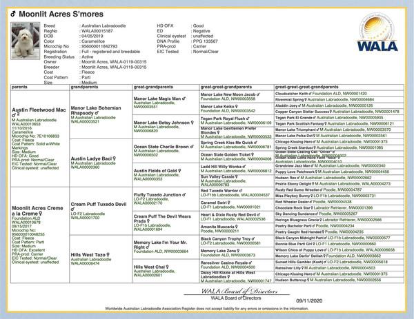 Pedigree Moonlit Acres Smores-WALA000151