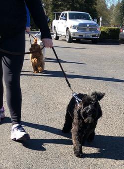 Walking on a leash