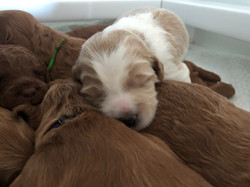Two weeks old now