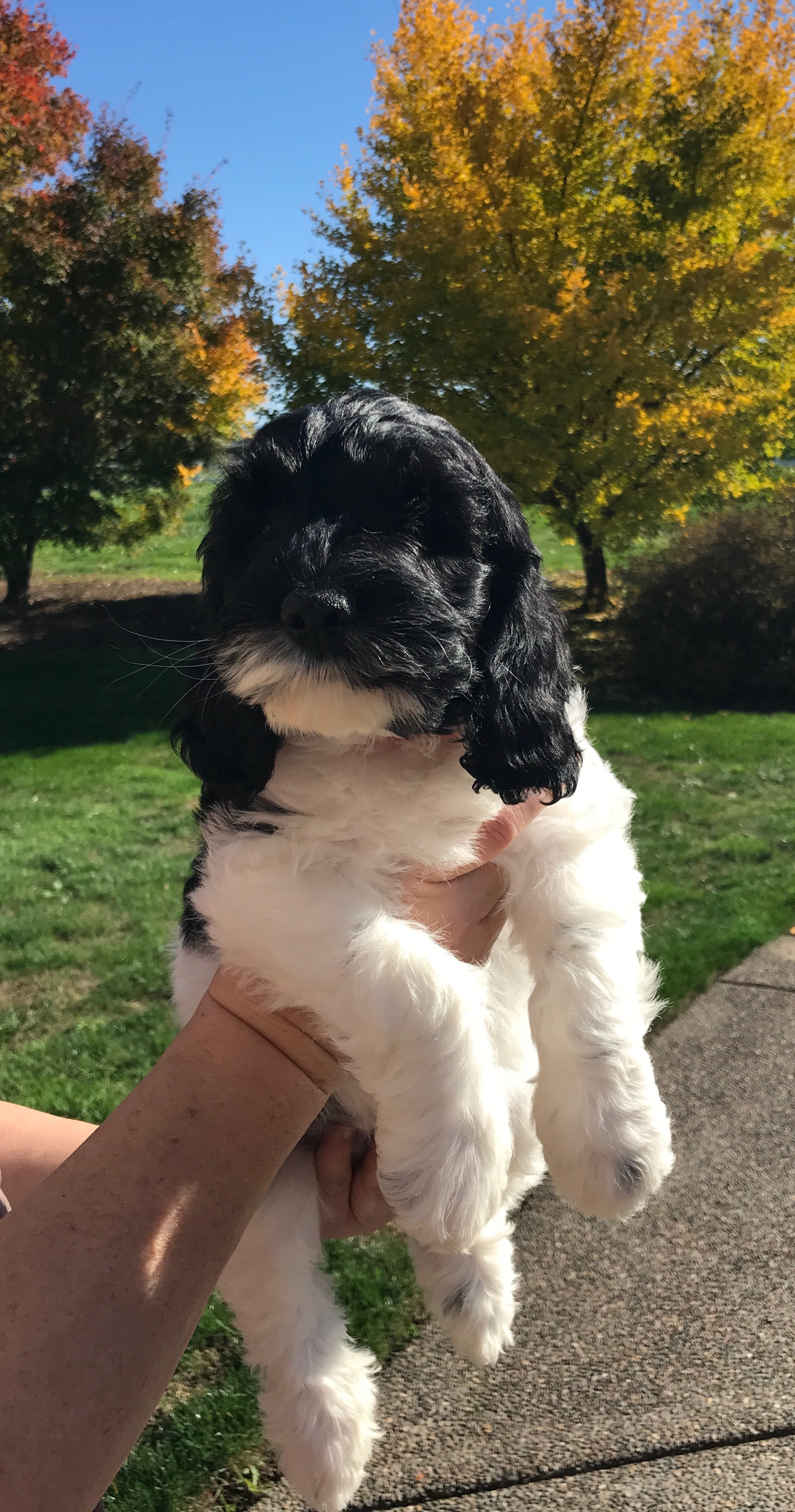 Gracie's past puppy