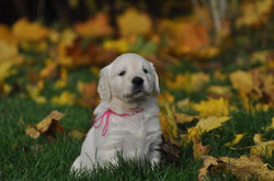 olivia as a puppy