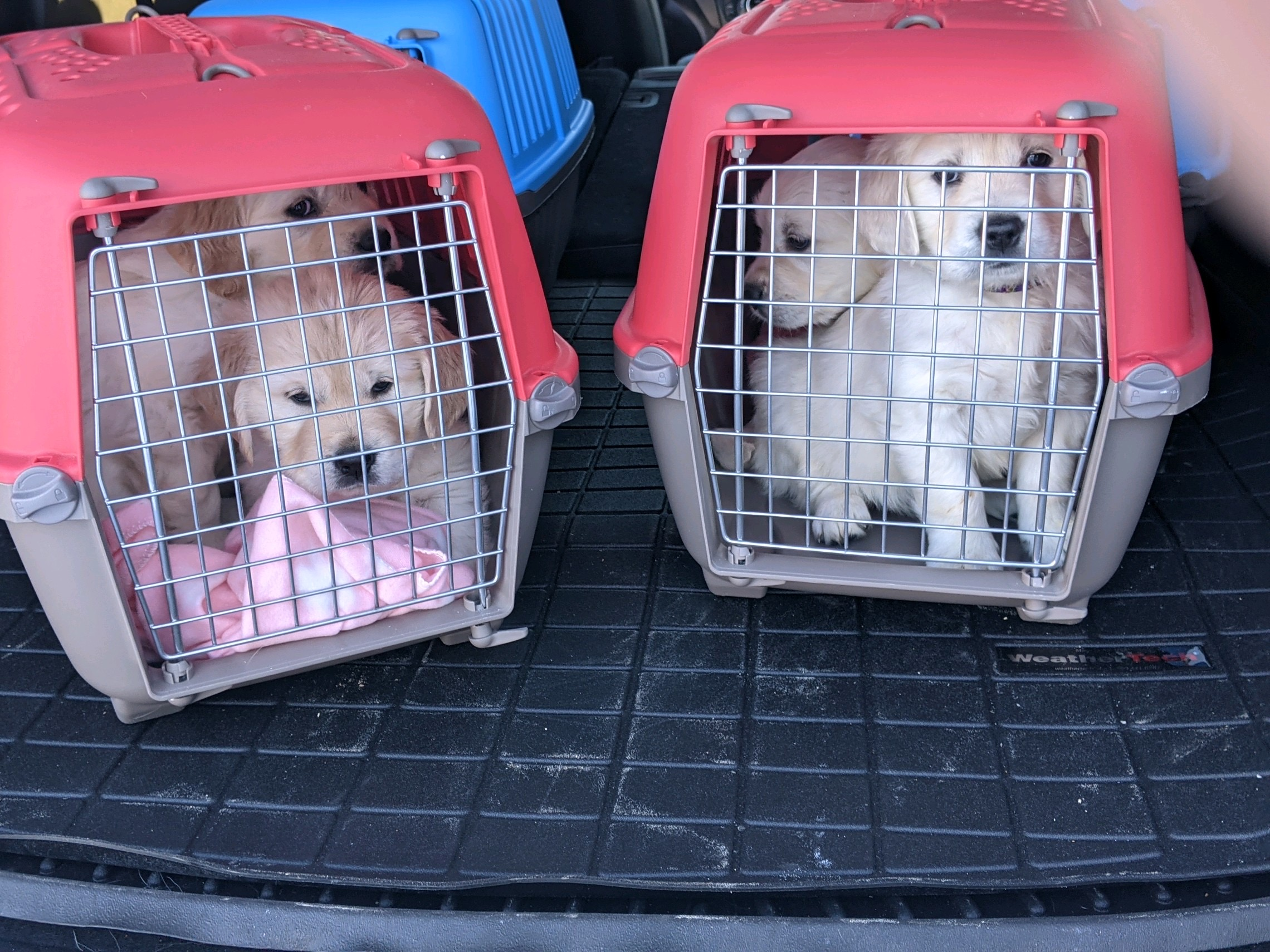 Kennel Time & Drive Time