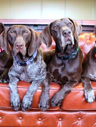 Maxwell Wines, McLaren Vale Wine Dogs Australia 5