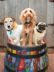 Trevor, Rocco and Milly
