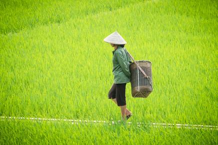 Vietnam #5