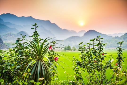 Vietnam #6
