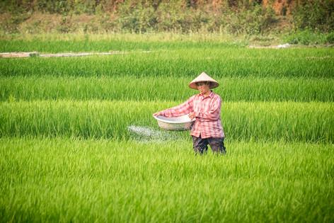 Vietnam 39