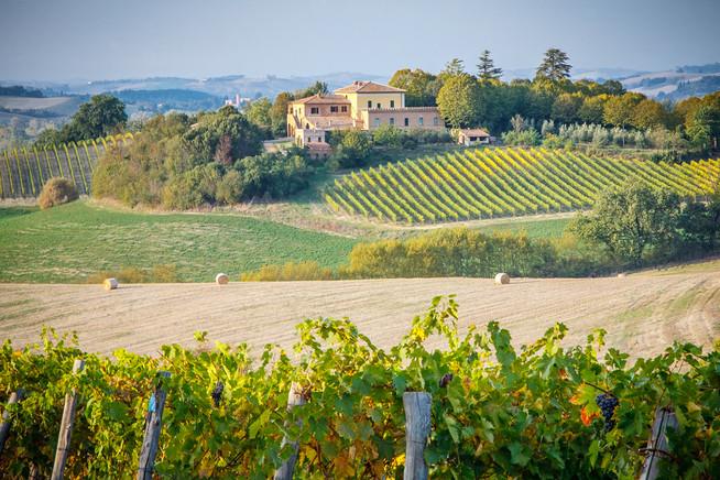 Vineyard In Tuscany.jpg