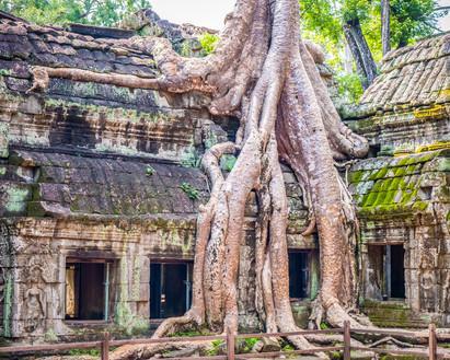 Cambodia #19