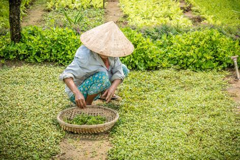 Vietnam 2-13.jpg